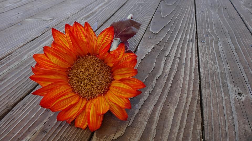 संन्यास नहीं,  रिश्तों का साथ निभाते हुए बने आध्यात्मिक